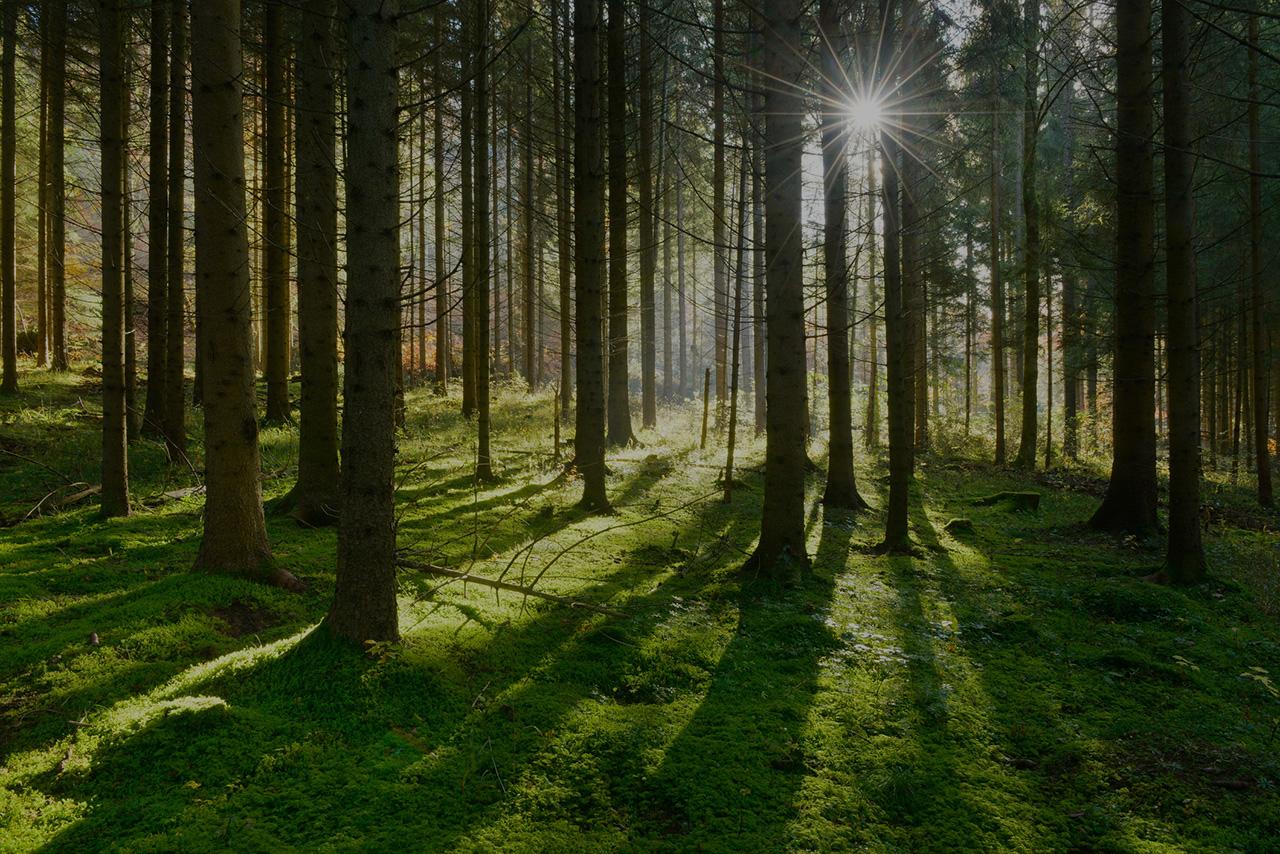 könnnen-bäume-sprechen